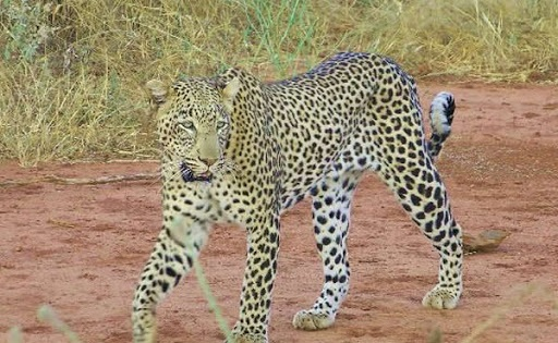 Best Time To Go to Serengeti National Park