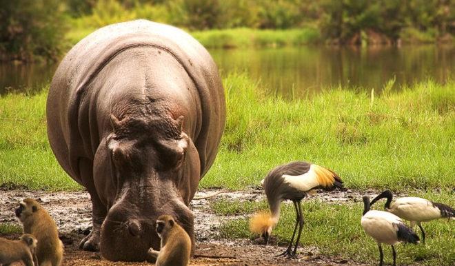 Great wildebeest migration in Serengeti National Park