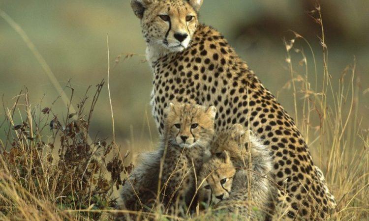 10 Days Tsavo & Masai Mara Safari