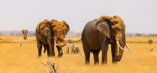 4 Days Tsavo and Amboseli Safari