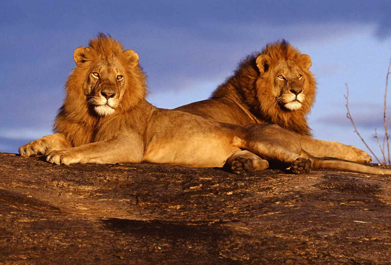 9 days Tsavo West, Amboseli & Samburu safari