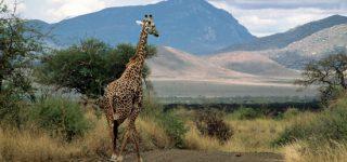 Tsavo national park size