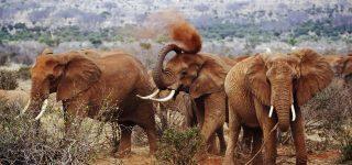 4 Days Tsavo East Wildlife Safari