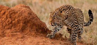 4 days Best Kenya wildlife safari