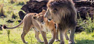 5 Days Tsavo West and Tsavo East Safari