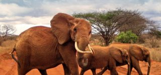 3 days Tsavo East National park safari