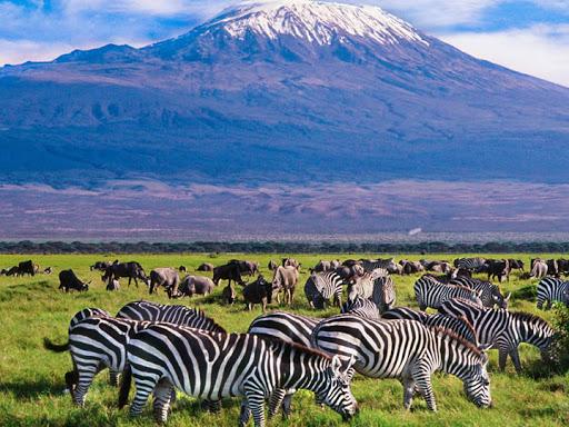 16 days Kenya wildlife safari & Mombasa Beach tour