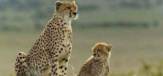 4 days Amboseli, Taita hills and Tsavo east safari