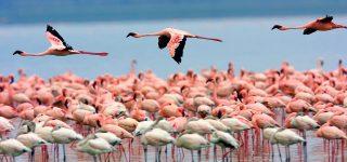 5 Days Amboseli and Nakuru safari