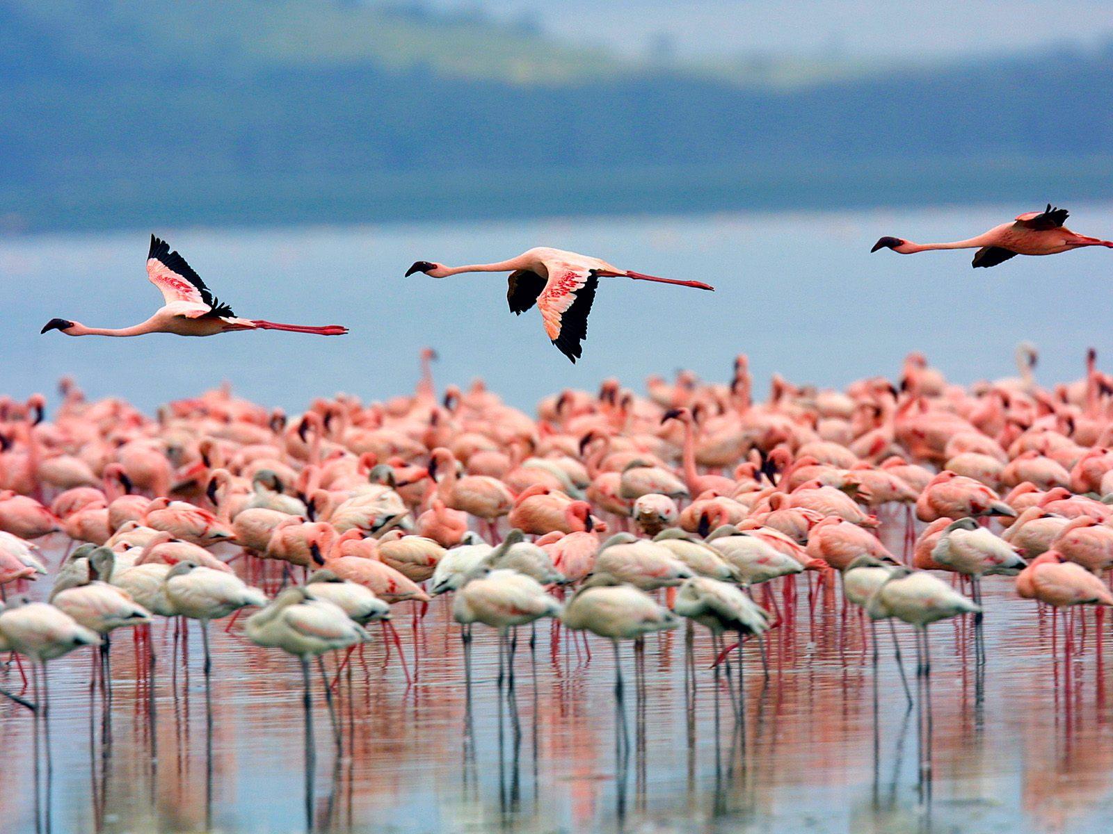 18 days Kenya wildlife safari & Mombasa Beach tour