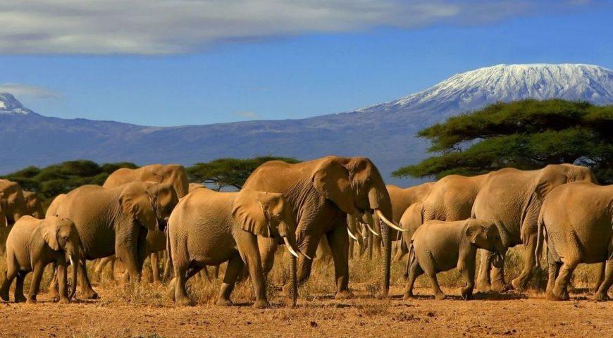 15 days Kenya wildlife safari & Mombasa Beach tour