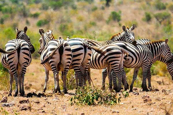 Tsavo National Park Day trips