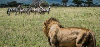 5 Days Kenya Wildlife safari (Amboseli and Tsavo national parks)
