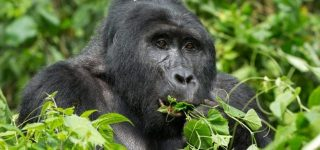6 Days Uganda Gorilla and Wildlife Safari