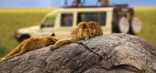 7 Days Kenya & Tanzania Wildlife Safari