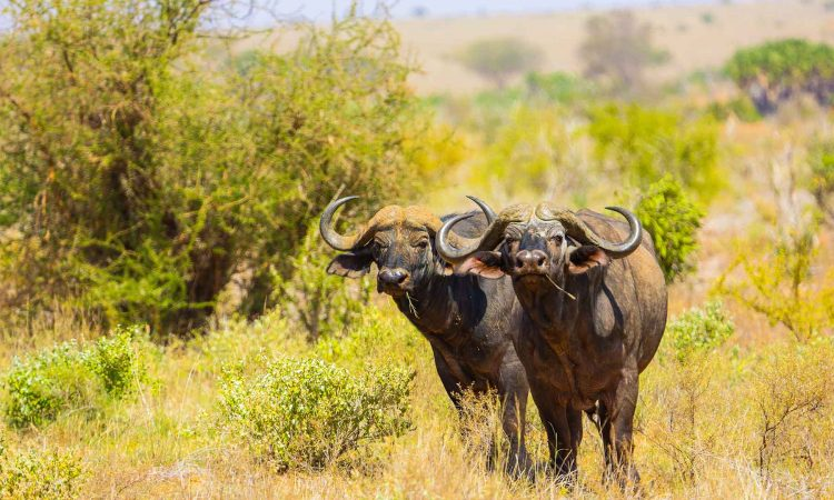 Attractions in Tsavo East National Park