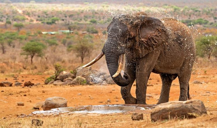Tourist attractions in Tsavo West National Park