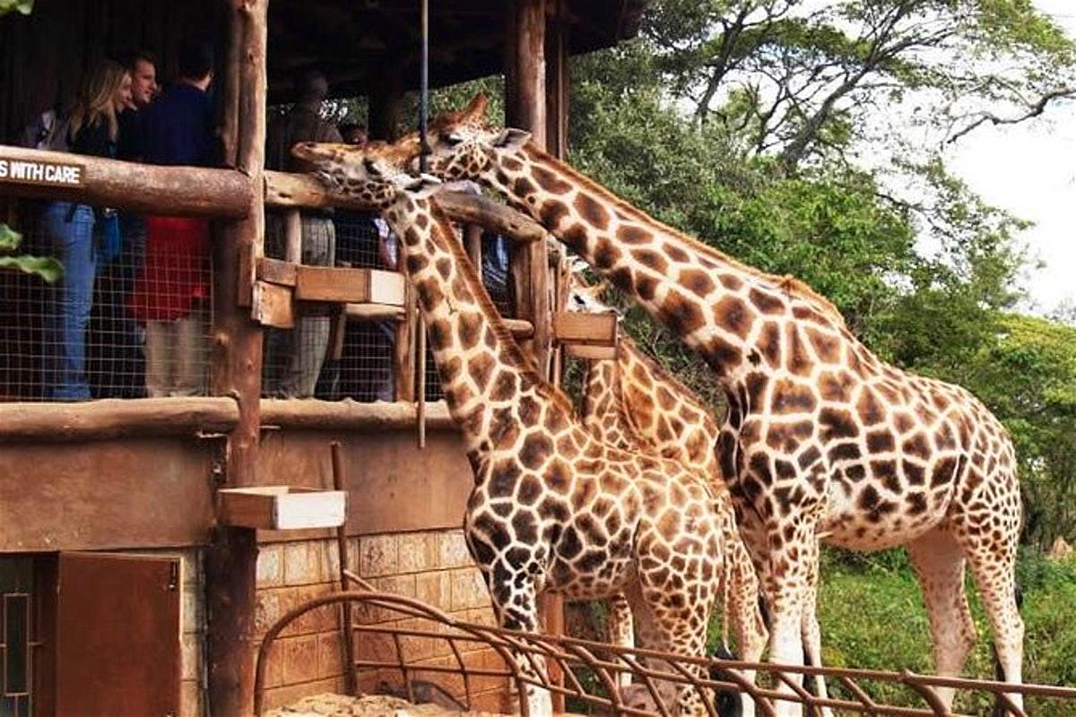 Top 10 things/ attractions in Nairobi Kenya
