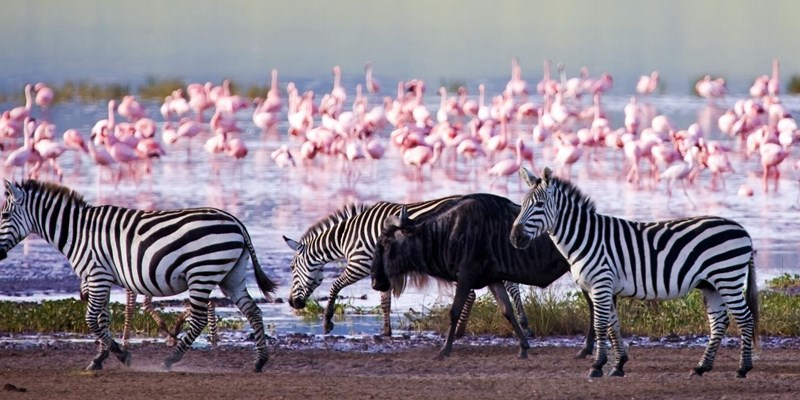 10 days Kenya wildlife safari & Nairobi city tour