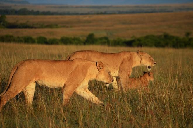 18 days Kenya Adventurous safari tour