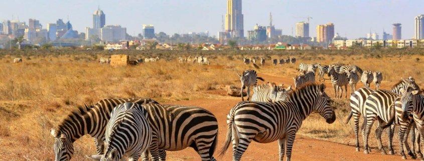 7 days Kenya Wildlife
