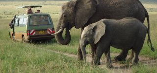 7 days Kenya adventurous safari